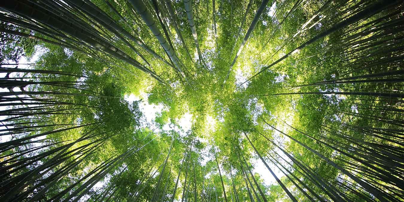 Holz im Bad: Natur pur